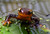 Newts are fascinating animals. Researchers joke that their skin contains enough toxin to kill 25,000 mice and two male college students. But they're cute. (Photo by Lauri Twitchell)