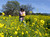 A field of mustard is a perfect backdrop for a family photo, but young Kaavya Shankar, 3, is not so sure as Ravi Shankar carries his daughter through the field along Shadelands Drive in Walnut Creek, Calif., on Sunday, March 17, 2013. (Susan Tripp Pollard/Staff)