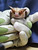 Corky Quirk, of Northern California Bats, holds a pallid bat up during a presentation about bats in the area and around the world at the East Palo Alto Library on Tuesday, March 19, 2013. Northern California Bats is a nonprofit that rescues, rehabilitates and releases bats and educates the community about them. For more information, visit http://www.norcalbats.org/ (Kirstina Sangsahachart/ Daily News)