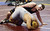 Las Lomas's Dylan Walsh in control of his 285-pound second round match against Reedley's Christain Garcia during the California Interscholastic Federation wrestling championships in Bakersfield, Calif., on Friday, March 1, 2013. Walsh would go onto get the win and advance to the third round. (Anda Chu/Staff)