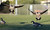 Canada geese land on the soccer field before being scared away by goose-chasing dogs at the Dublin Sports Grounds in Dublin, Calif., on Friday, Feb. 8, 2013. The the city hired 4Paws Goose Control to keep the Canada geese off the sports grounds. Other cities, like Fremont and Alameda, have also hired dogs to keep the geese away from their parks. (Doug Duran/Staff)