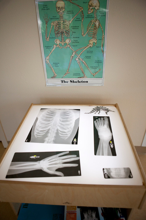 . A light table with x-rays is one of the educational items in a STEM classroom as teachers set up classrooms for the Harker School\'s new preschool in San Jose Wednesday, July 31, 2013. The school opens in September. (Patrick Tehan/Bay Area News Group)