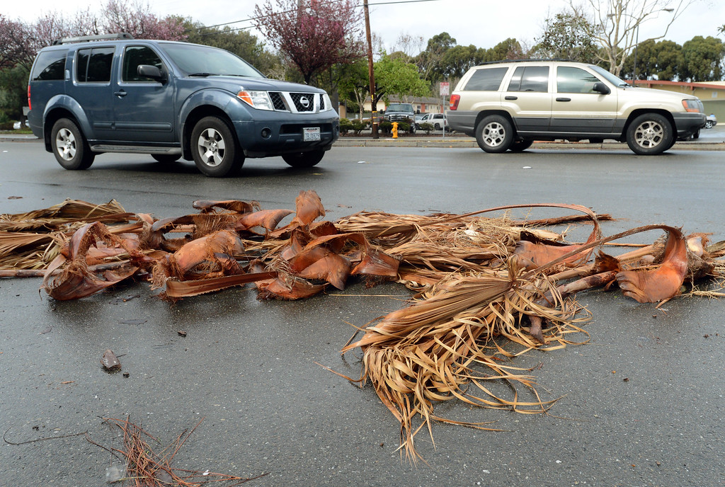 . Debris from palm trees along Tennyson Road litter the roadway in Hayward, Calif., on Friday, Feb. 28, 2014. Strong winds and heavy rains in the early morning hours pounded much of the Bay Area. (Dan Honda/Bay Area News Group)