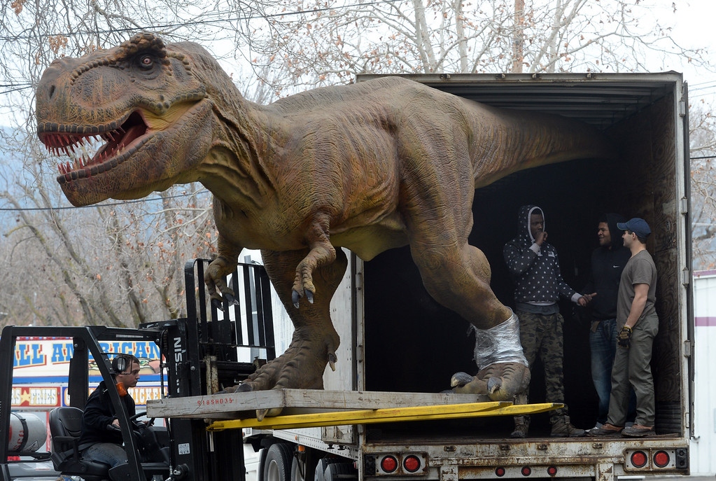 """. Workers unload a Tyrannosaurus Rex from a trailer as they prepare for the Jurassic Quest exhibit held this weekend at the Alameda County Fairgrounds in Pleasanton, Calif., on Thursday, Feb. 6, 2014. The indoor exhibit features  life-size, ultra-realistic animatronic dinosaurs from the Jurassic, Triassic and Cretaceous periods. Visitors can interact with the dinosaurs and learn about them and even ride a few. There will be a T-Rex and Triceratops fossil digs where young paleontologists can uncover long hidden dinosaurs bones. Their is also a \""""Dino Bounce\"""" children\'s play area with several, towering, dinosaur theme inflatable mazes. (Doug Duran/Bay Area News Group)"""