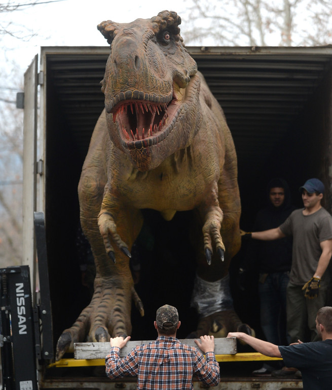 """. Workers unload a Tyrannosaurus Rex from a trailer as they prepare for the Jurassic Quest held this weekend at the Alameda County Fairgrounds in Pleasanton, Calif., on Thursday, Feb. 6, 2014. The indoor exhibit features  life-size, ultra-realistic animatronic dinosaurs from the Jurassic, Triassic and Cretaceous periods. Visitors can interact with the dinosaurs and learn about them and even ride a few. There will be a T-Rex and Triceratops fossil digs where young paleontologists can uncover long hidden dinosaurs bones. Their is also a \""""Dino Bounce\"""" children\'s play area with several, towering, dinosaur theme inflatable mazes. (Doug Duran/Bay Area News Group)"""