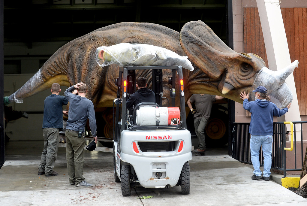 """. A Triceratops is moved into an exhibit hall for the Jurassic Quest exhibit held this weekend at the Alameda County Fairgrounds in Pleasanton, Calif., on Thursday, Feb. 6, 2014. The indoor exhibit features  life-size, ultra-realistic animatronic dinosaurs from the Jurassic, Triassic and Cretaceous periods. Visitors can interact with the dinosaurs and learn about them and even ride a few. There will be a T-Rex and Triceratops fossil digs where young paleontologists can uncover long hidden dinosaurs bones. Their is also a \""""Dino Bounce\"""" children\'s play area with several, towering, dinosaur theme inflatable mazes. (Doug Duran/Bay Area News Group)"""