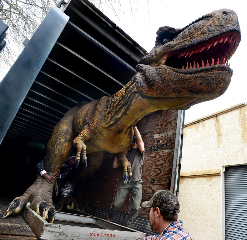 """. From left, Michael Robinson, of Houston, Texas, Brandon Arnold, of Spring, Texas, and Dante Parodi, of Alameda, unload a Tyrannosaurus Rex from a trailer as they prepare for the Jurassic Quest exhibit held this weekend at the Alameda County Fairgrounds in Pleasanton, Calif., on Thursday, Feb. 6, 2014. The indoor exhibit features  life-size, ultra-realistic animatronic dinosaurs from the Jurassic, Triassic and Cretaceous periods. Visitors can interact with the dinosaurs and learn about them and even ride a few. There will be a T-Rex and Triceratops fossil digs where young paleontologists can uncover long hidden dinosaurs bones. Their is also a \""""Dino Bounce\"""" children\'s play area with several, towering, dinosaur theme inflatable mazes. (Doug Duran/Bay Area News Group)"""