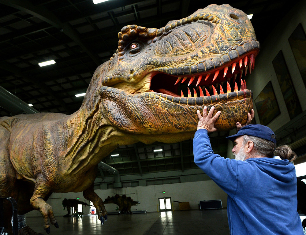 """. Ken DiScala, 60, of Livermore, who is in charge of mechanics, electrical work and robotics for the Jurassic Quest exhibit helps unload a Tyrannosaurus Rex from a trailer as they prepare for an event held this weekend at the Alameda County Fairgrounds in Pleasanton, Calif., on Thursday, Feb. 6, 2014. The indoor exhibit features  life-size, ultra-realistic animatronic dinosaurs from the Jurassic, Triassic and Cretaceous periods. Visitors can interact with the dinosaurs and learn about them and even ride a few. There will be a T-Rex and Triceratops fossil digs where young paleontologists can uncover long hidden dinosaurs bones. Their is also a \""""Dino Bounce\"""" children\'s play area with several, towering, dinosaur theme inflatable mazes. (Doug Duran/Bay Area News Group)"""