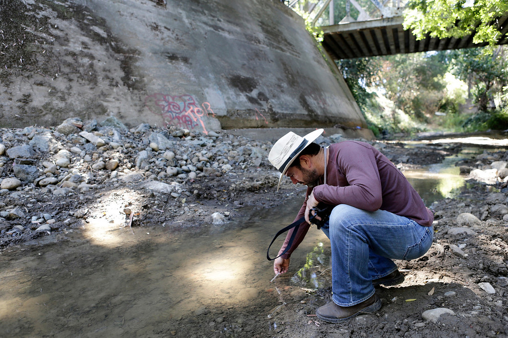 . Gordon Becker of the Center for Ecosystem Management and Restoration checks the temperature of the water along San Francisquito Creek in Menlo Park, Calif., on Thursday, Sept. 5, 2013. Becker was among those who attended an event headed by the U.S. Environmental Protection Agency to celebrate the removal of a fish-passage barrier known as a Bonde weir at this spot on San Francisquito Creek which will now improve access to the spawning habitat for migrating native steelhead trout, a federally-threatened species.  (Gary Reyes/Bay Area News Group)
