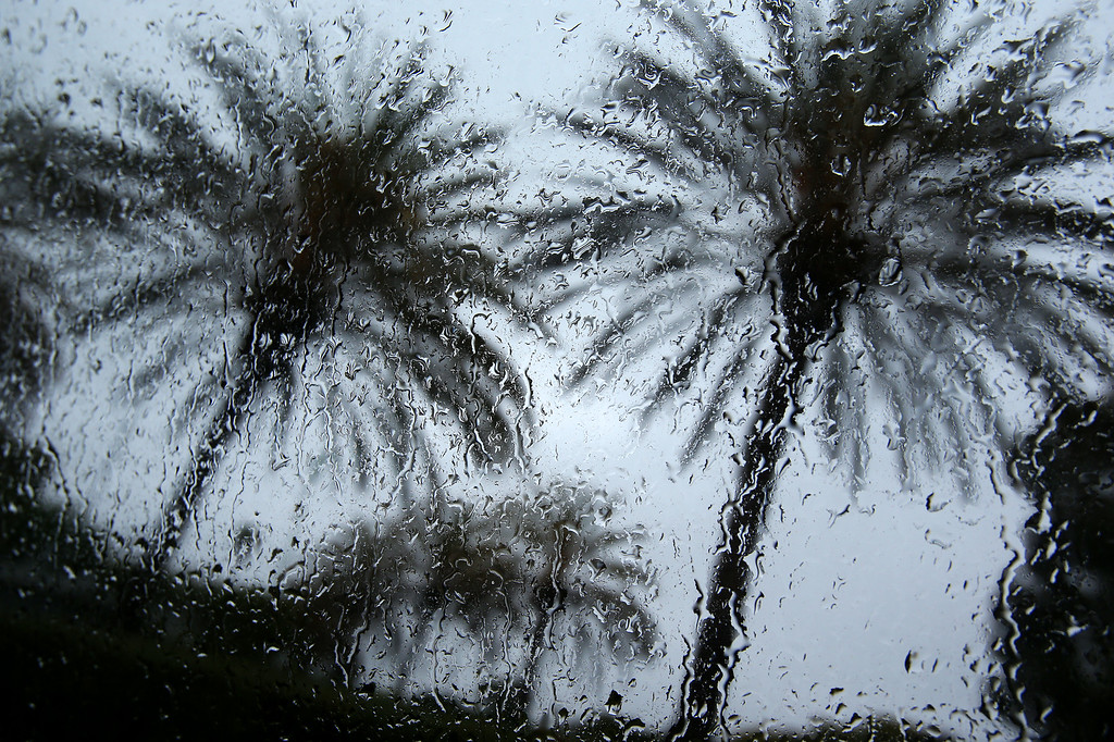 . Palm trees are photographed through a rain-splattered window near the San Lenadro Marina on Sunday, Feb. 9, 2014, in San Leandro, Calif.  Rain is expected to last into Monday morning around the San Francisco Bay Area.   (Aric Crabb/Bay Area News Group)