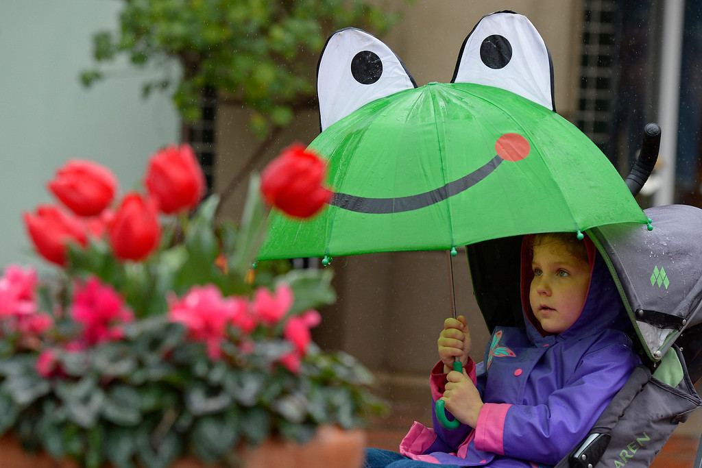 . Alissa Yamkelevich, 5, of Pleasant Hill, shields herself from the rain with her frog umbrella while visiting Broadway Plaza in Walnut Creek, Calif., on Saturday, Feb. 8, 2014. (Jose Carlos Fajardo/Bay Area News Group)