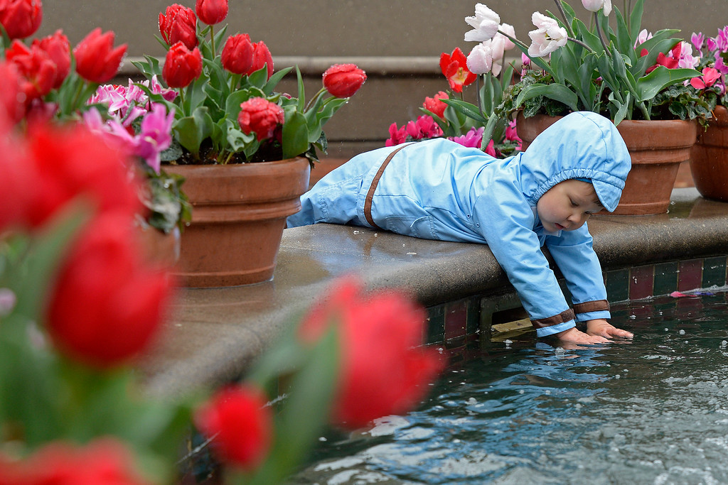 . Artem Yamkelevich, 2, of Pleasant Hill, places his hands in the fountain as rain clouds pass over Broadway Plaza in Walnut Creek, Calif., on Saturday, Feb. 8, 2014. (Jose Carlos Fajardo/Bay Area News Group)