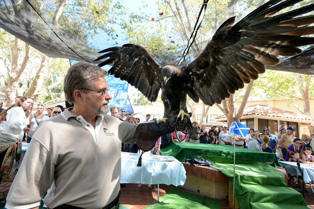 ". Micheal Pociecha, of San Ramon, holds his Golden Eagle named ""Cleopatra\"" at the birds of prey exhibit during the 148th annual Scottish Highland Gathering and Games held at the Alameda County Fairgrounds in Pleasanton, Calif., on Saturday, Aug. 13, 2013. As a chick Cleopatra contracted West Nile virus, as a result she can no longer live in the wild. The Scottish Highland Gathering and Games continues on Sunday. (Doug Duran/Bay Area News Group)"
