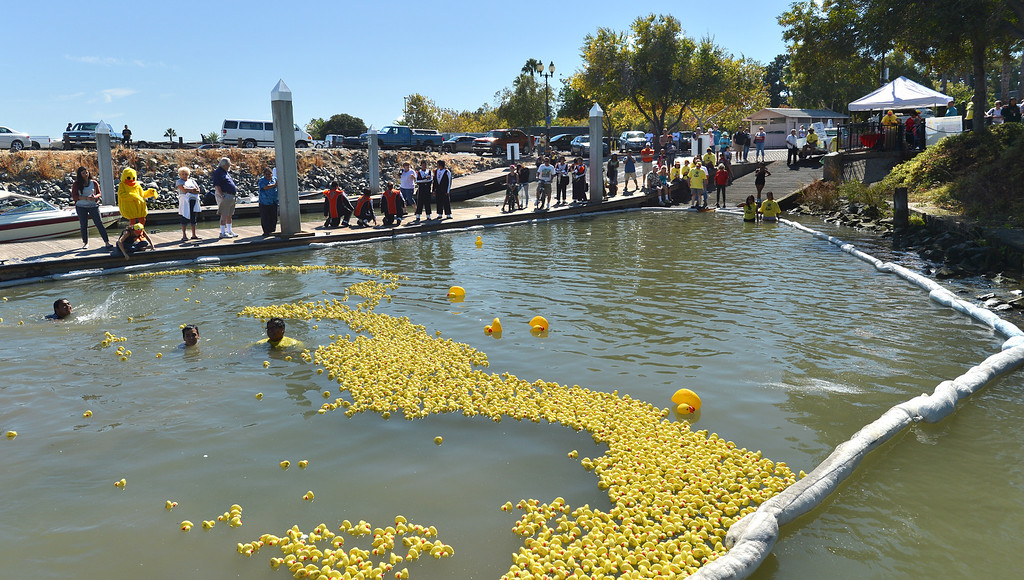 . Spectators watch a large number of yellow ducks float to the finish line at the Pittsburg Marina during the yellow duck races in Pittsburg, Calif., on Saturday, Sept. 28, 2013. The races benefit the Pittsburg Marching Show Band, who are trying to raise money so they can participate in the New Year\'s Day parade. (Dan Rosenstrauch/Bay Area News Group)