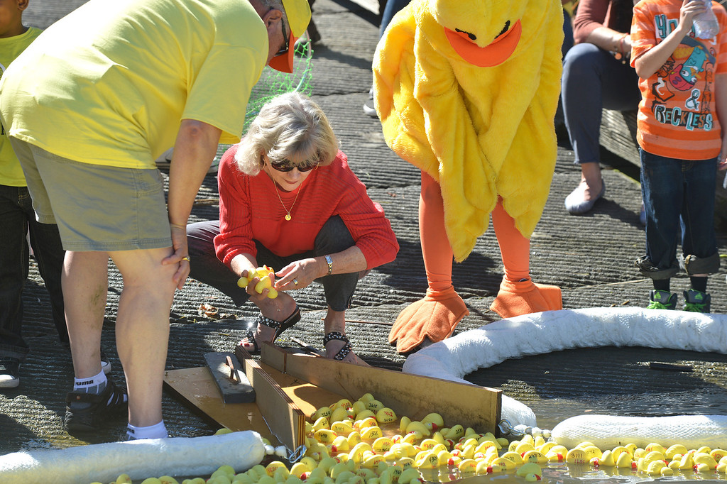 . Pittsburg Unified School District Superintendent Linda Rondeau, center, pulls out the winners at the finish line during the yellow duck races in Pittsburg, Calif., on Saturday, Sept. 28, 2013. The races benefit the Pittsburg Marching Show Band, which is trying to raise money so they can participate in the New Year\'s Day parade in London. (Dan Rosenstrauch/Bay Area News Group)