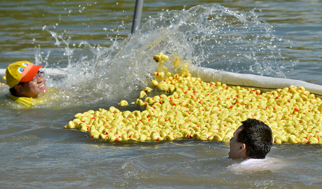 . Justin Simon, left, and Lorenzo Reyes, right, both from Circle K International at Los Medanos College in Pittsburg, splash water to try and get a large number of yellow ducks down to the end of the Pittsburg Marina to the finish line during the yellow duck races in Pittsburg, Calif., on Saturday, Sept. 28, 2013. The races benefit the Pittsburg Marching Show Band, who are trying to raise money so they can participate in the New Year\'s Day parade. (Dan Rosenstrauch/Bay Area News Group)