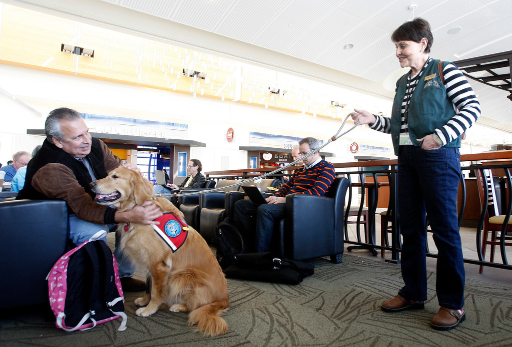 ". Saying ""I need some therapy\"", Steve Kirsch of Temucal rushed up for a chance to \""therapy dog\"" Henry James at the business end of a leash held by Kyra Hubis at Mineta San Jose International Airport in San Jose, Calif. on Monday, Jan. 28, 2013.  (Karl Mondon/Staff)"
