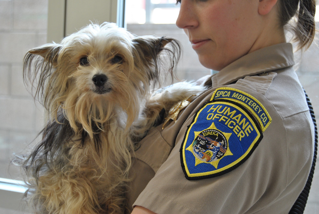 . Rescued by the SPCA. (SPCA for Monterey County)