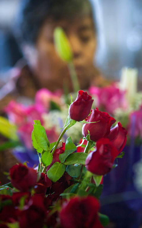 . Roses at Repetto\'s Greenhouse Florist and  in Half Moon Bay, Calif. on Wednesday, Feb. 13, 2013.