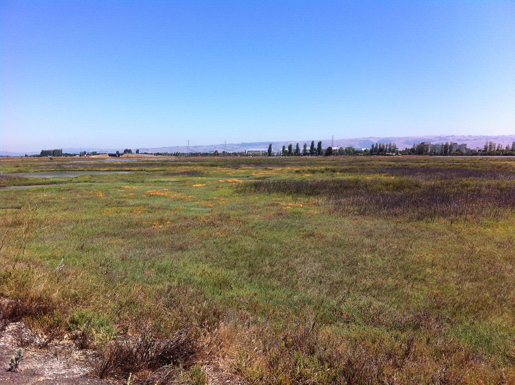 . Another view of the marsh.  (Joan Morris/Staff)