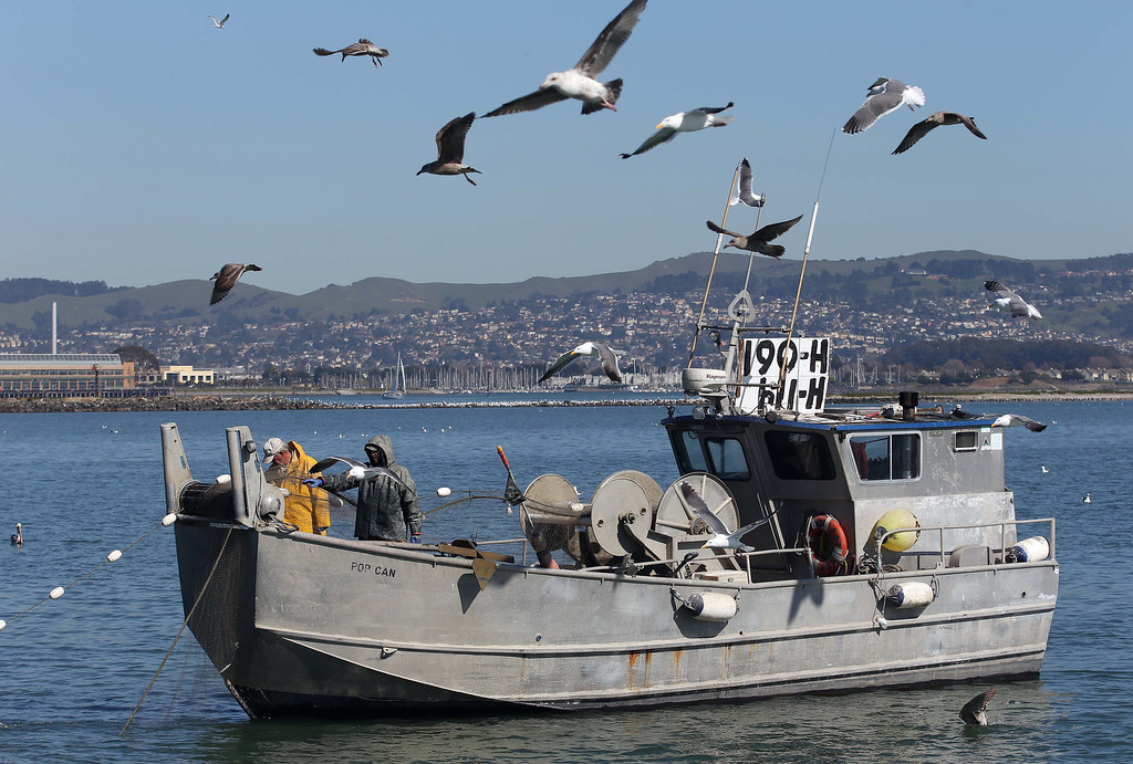 . Captain Larry Conrad, of Santa Rosa, left, and crew member Julian Thorn, of Sebastopol, haul in their nets as they fish for herring off Point Richmond near Brooks Island in Richmond, Calif., on Thursday, Feb. 14, 2013. (Jane Tyska/Staff)