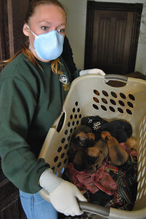 . The conditions in the house were so bad, rescuers were forced to don protective gear. (SPCA for Monterey County)