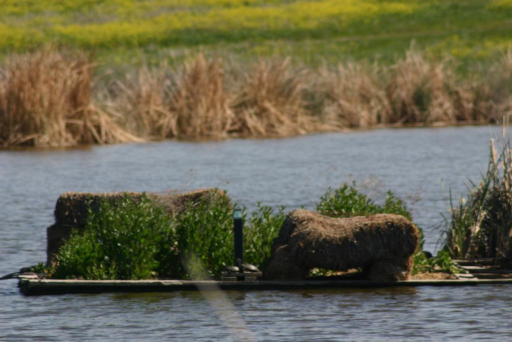 . The beaver pond. (Joan Morris/Mercury News)