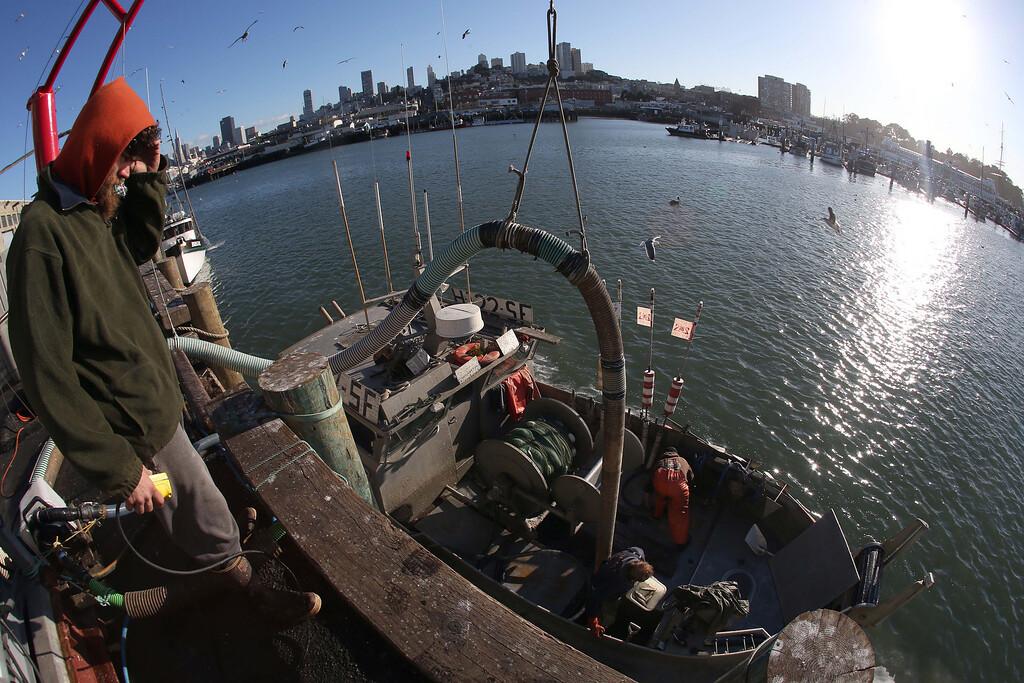 . Herring are unloaded from Dennis Deaver\'s boat at the  San Francisco Community Fishing Association dock on Pier 45 in San Francisco, Calif., on Friday, Feb. 8, 2013.  (Jane Tyska/Staff)