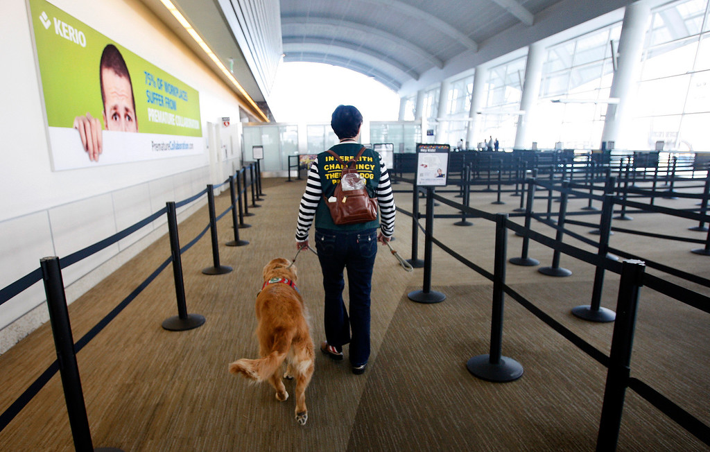 ". Kyra Hubis walks her ""therapy dog\"" Henry James up to the security area at Mineta San Jose International Airport in San Jose, Calif. on Monday, Jan. 28, 2013. Henry James is one of eleven dogs used by the airport\'s interfaith chaplaincy to help passengers who are dealing with grief, stress, or need emotional support at the airport. (Karl Mondon/Staff)"