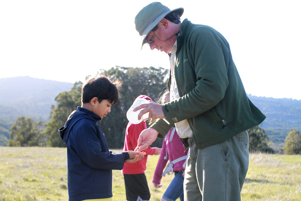 . Scientist Stuart Weiss hands out Bay Checkerspot caterpillars to volunteers to release them at the Edgewood County Park and Natural Preserve in Redwood City on Thursday, Feb. 21, 2013. Four hundred caterpillars were released into their natural habitat; the park�s butterfly population became extinct in 2003. The Bay Checkerspot butterfly is on the federal threatened list of endangered species. (Kirstina Sangsahachart/ Daily News)