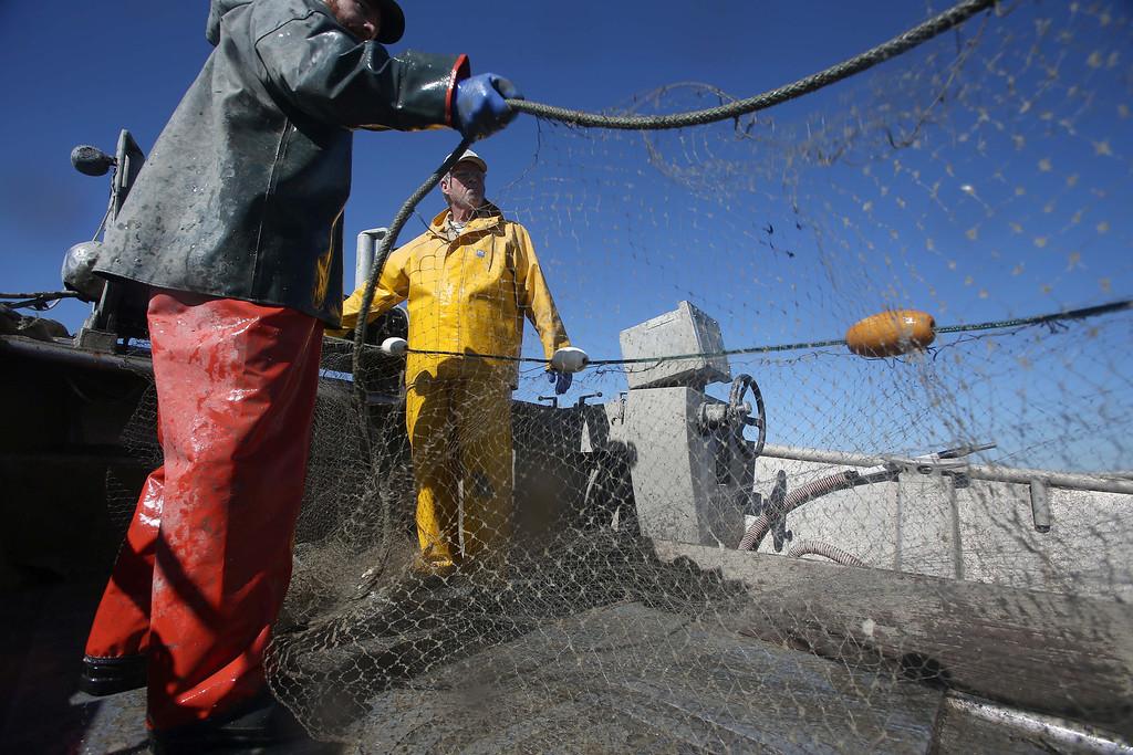 . Captain Larry Conrad, of Santa Rosa, right, and crew member Julian Thorn, of Sebastopol, haul in their nets as they fish for herring off Point Richmond near Brooks Island in Richmond, Calif., on Thursday, Feb. 14, 2013.  (Jane Tyska/Staff)