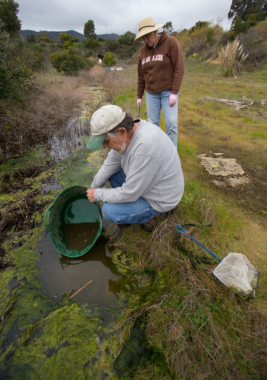 . Jim McKissock, with Earthcare Now and volunteer Gail Wilson put tadpoles in an old railroad ditch in Brisbane (John Green/Staff)