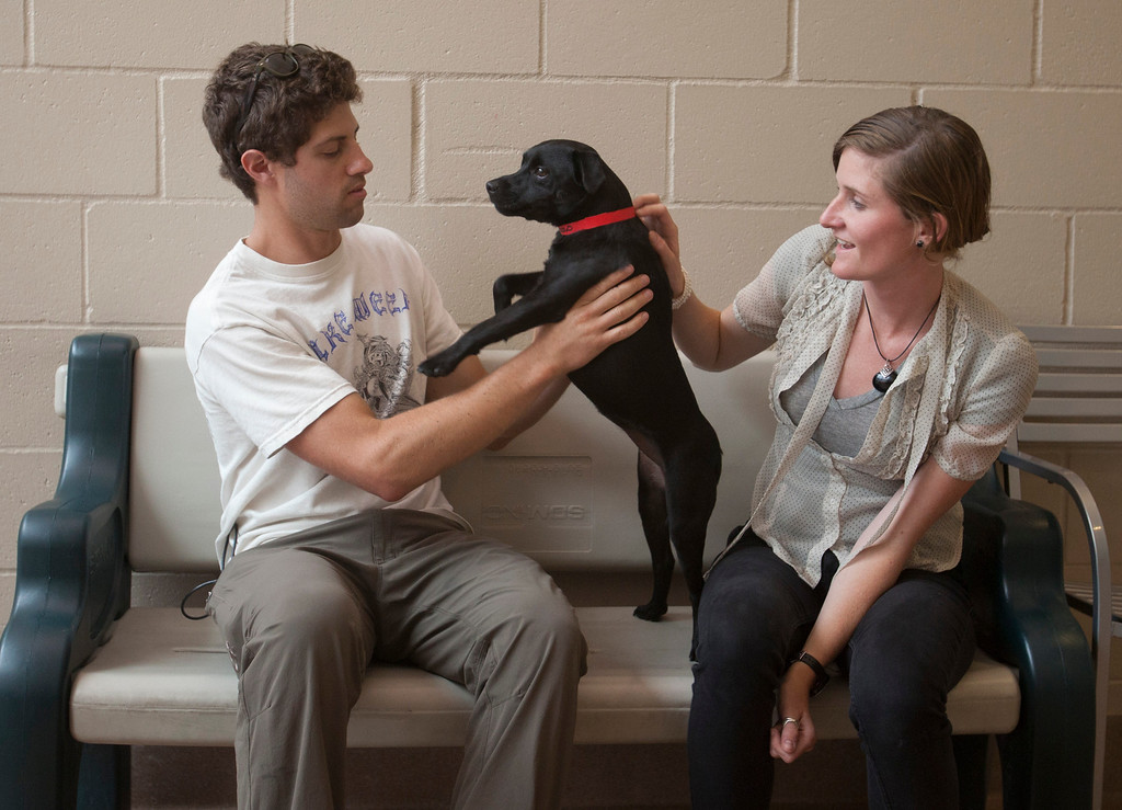 ". Ian Lebov and Kelly Mercer of Santa Cruz play with ""Lucy\"", a dog they are thinking of adopting at the San Jose Animal Care Center in San Jose Saturday, July 21, 2013. South Bay\'s animal shelters are overrun and looking for help from the public. All the shelters are working together on an adoption initiative. (Patrick Tehan/Staff)"