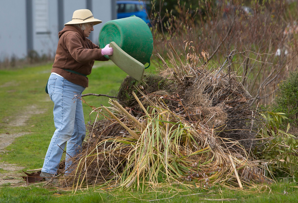 . Volunteer Gail Wilson dumps weeds  in Brisbane, Calif., on Tuesday, Feb. 5, 2013. The Brisbane Wetlands Stewardship Program with the city of Brisbane are working to protect local native plants.(John Green/Staff)