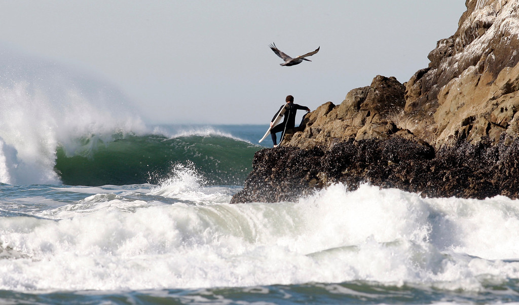 . A curious pelican flies over a novice surfer who got himself stranded on Seal Rocks in San Francisco on Monday morning, Jan. 21, 2013. Personnel from the fire department and the U.S. Coast Guard rescued the man, who may not be ready for the Mavericks Invitational. (Karl Mondon/Staff)