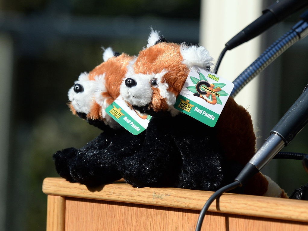 ". Stuffed red panda toys on display as Tenzing, a red panda, makes his debut in his new habitat at the San Francisco Zoo in San Francisco, Calif., on Wednesday, May 7, 2014. The 10-month old red panda was born at the Sacramento Zoo and was named after the framed Sherpa Tenzing Norgay, who scaled Mt. Everest in 1953 with Sir Edmund Hillary. Tenzing\'s habitat, called The Red Panda Treehouse was designed and built by Pete Nelson and his crew from the  Animal Planet television show ""Treehouse Masters.\"" (Dan Honda/Bay Area News Group)"