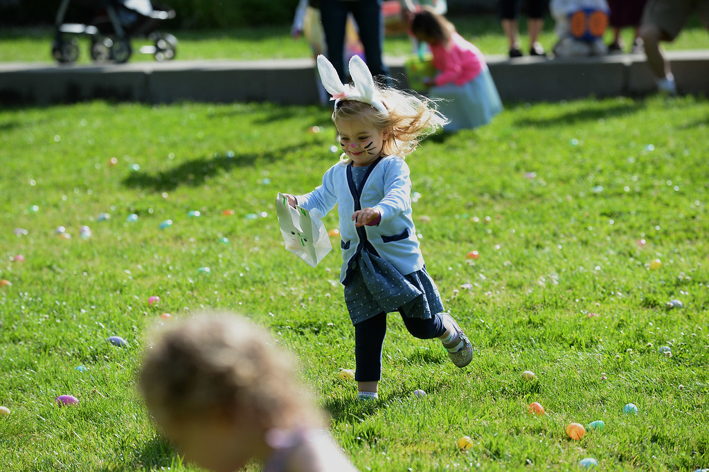 """. Claire Thompkins, 3, of Danville, races out to collect Easter eggs at the Town of Danville\'s \""""Eggstravaganza\"""" held at the Danville Community Center in Danville, Calif., on Saturday, April 12, 2014. The event featured egg hunts for children of all ages as well as fun activities and snacks. (Dan Honda/Bay Area News Group)"""