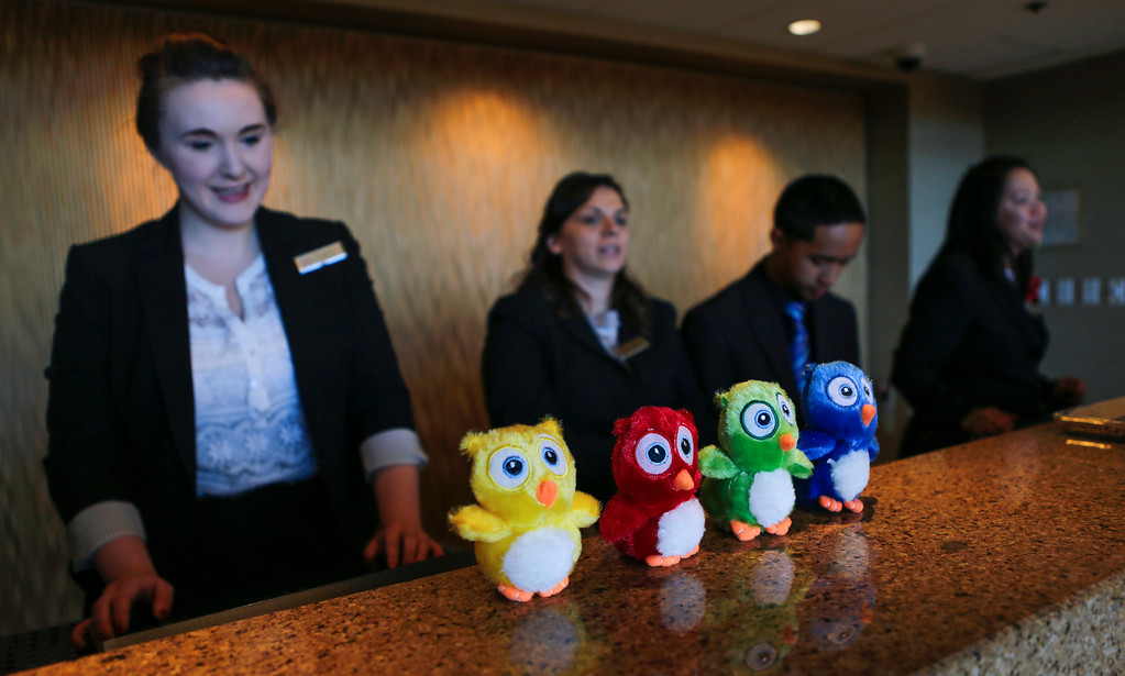 . Stuffed owl toys are given out to kids at the San Francisco Airport Marriott Waterfront hotel where barn owls have made a nest outside two rooms on the 11th floor, in Burlingame, Calif., on Friday, Aug. 2, 2013. (John Green/Bay Area News Group)