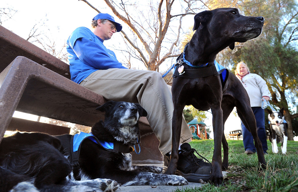 . Mike Ford of 4Paws Goose Control, sits with the dogs at the Dublin Sports Grounds in Dublin, Calif., on Friday, Feb. 8, 2013. The the city hired the goose-chasing dogs to keep the Canada geese off the sports grounds. Other cities, like Fremont and Alameda, have also hired dogs to keep the geese away from their parks. (Doug Duran/Staff)