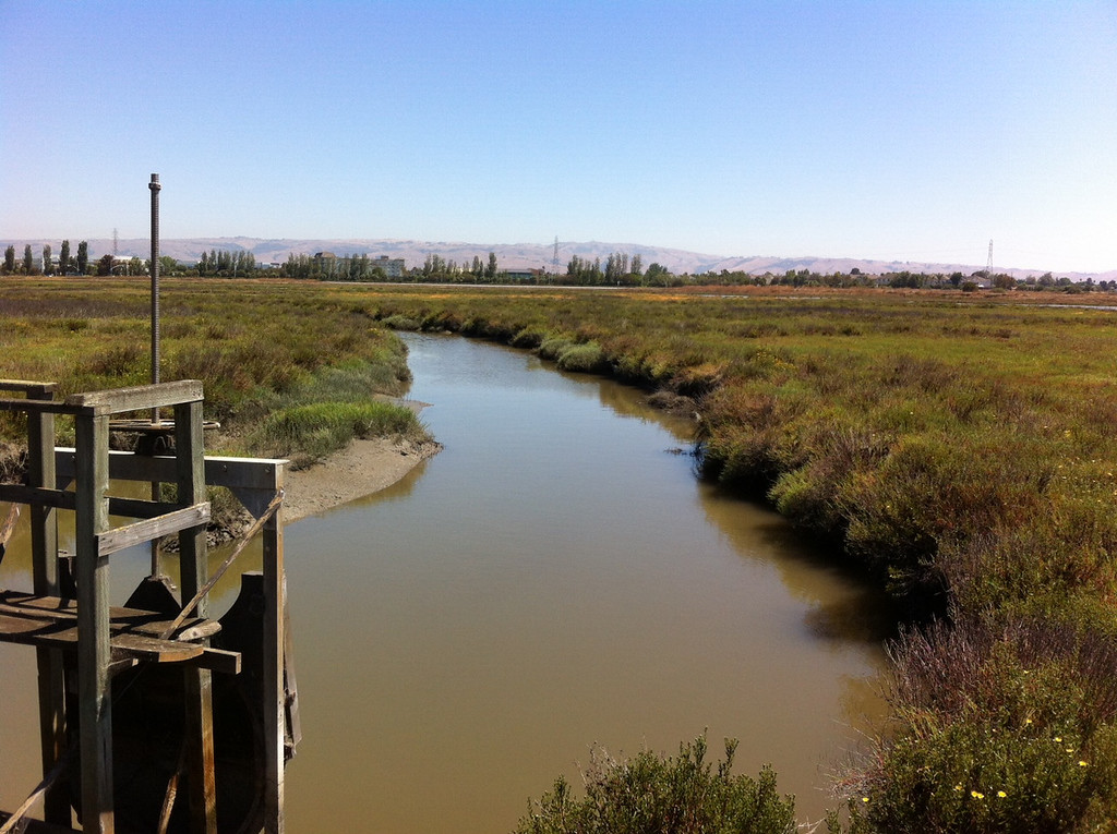 . The LaRiviere Marsh is part of the Don Edwards San Francisco Bay National Wildlife Refuge. (Joan Morris/Staff)