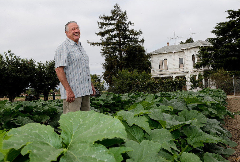 . David Giordano, farm manager, stands with the pumpkin crop in the middle of what will be Martial Cottle Park in south San Jose, Calif. on Friday, Aug. 9, 2013. Behind him is the farmhouse on the property. The farm goes back 150 years. Official groundbreaking took place today on what will be a new state and county park that will showcase the rich agricultural history of Silicon Valley. The 287 acres is one of the last working farms in San Jose.  (Gary Reyes/Bay Area News Group)