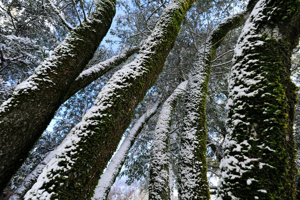 . A dusting of snow turns Mount Diablo State Park into a winter wonderland in  Walnut Creek, Calif., on Tuesday, Feb. 19, 2013.   (Susan Tripp Pollard/Staff)