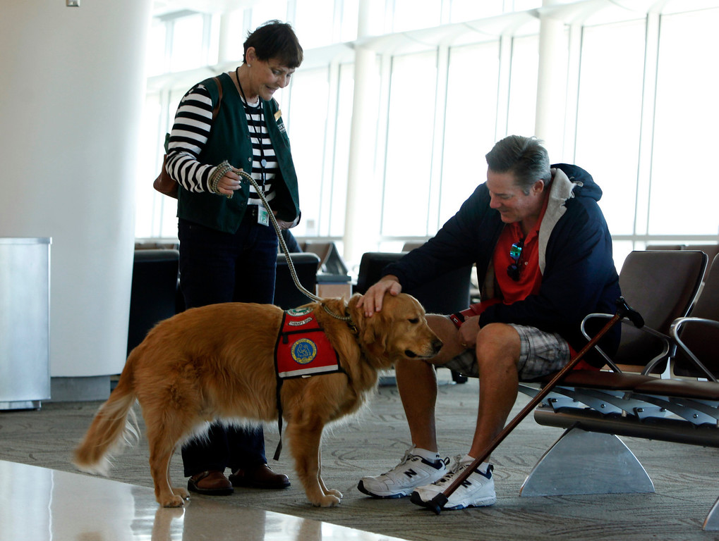 . Joe Truckey, of Orange County, enjoys the company of Kyra Hubis and therapy dog Henry James at Mineta San Jose International Airport in San Jose, Calif. on Monday, Jan. 28, 2013. Truckey first became acquainted with therapy dogs when spending time in the hospital two years ago for an old leg injury. (Karl Mondon/Staff)