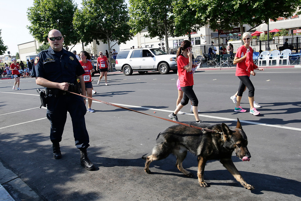 . Frank Dal Porto Jr. of the San Mateo County Sheriff\'s Department bomb squad and his dog, Ringo, provide security before the start of the annual Fourth of July parade in Redwood City, Calif. on Thursday, July 4, 2013. Considered the largest Independence Day parade in Northern California, it is celebrating its 75th year. (Gary Reyes/Bay Area News Group)