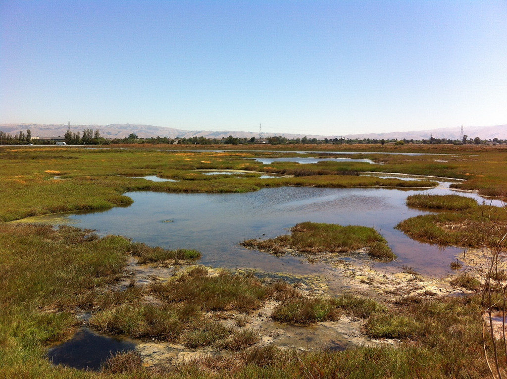 . This entire area was saved by volunteers with the Citizens Committee to Complete the Refuge. The group still is working to save other wetland areas from development.  (Joan Morris/Staff)