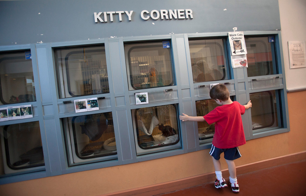 . Travis Divine, 4, of San Jose checks out cats available for adoption at the San Jose Animal Care Center in San Jose Saturday, July 21, 2013. South Bay\'s animal shelters are overrun and looking for help from the public. All the shelters are working together on an adoption initiative. (Patrick Tehan/Staff)